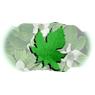 /images/logos/local/th_herbalsaarogya.jpg