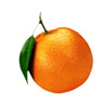 /images/logos/local/th_orangebiotech.jpg