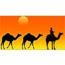 /images/logos/local/th_rajasthantour.jpg