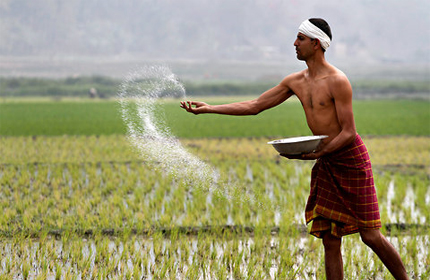 Agricultural Products Companies in India  Agriculture