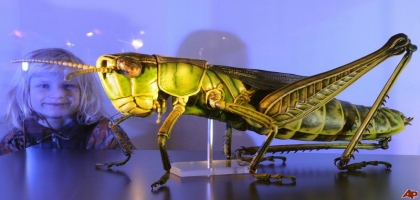 Museum of Arthropoda