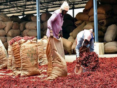 ITC to develop value chain for chilli growers in Andhra Pradesh